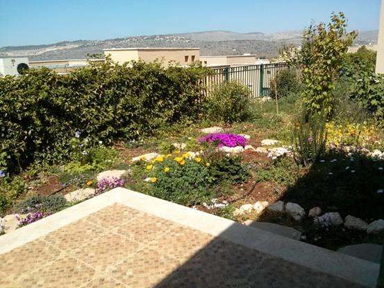 הנוף מהמשרד הביתי שלי