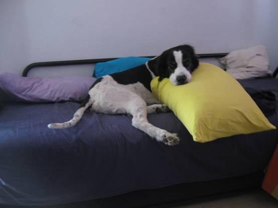 מי שמאוד מרוצה מזה שאני עובד מהבית – חוץ ממני, כמובן – זה בוץ', הכלב שלנו.